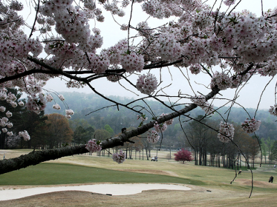 Hoover Country Club,Birmingham, Alabama,  - Golf Course Photo