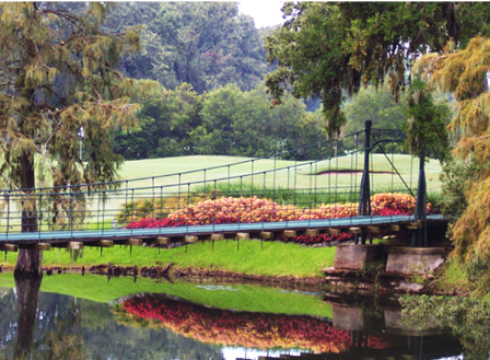 Golf Course Photo, Lakeside Country Club Golf Course, Houston, 77042