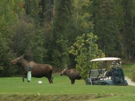 North Star Golf Club,Fairbanks, Alaska,  - Golf Course Photo