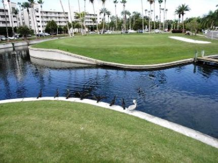 Golf Course Photo, Isla Del Sol Golf Yacht & Country Club, Saint Petersburg, 33715
