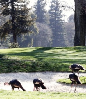 Spring Creek Golf Course & Country Club,Ripon, California,  - Golf Course Photo