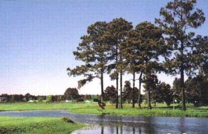 Beauregard Country Club,Deridder, Louisiana,  - Golf Course Photo