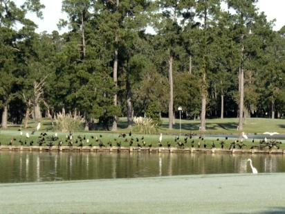 Kingwood Country Club - Island, Kingwood, Texas, 77339 - Golf Course Photo
