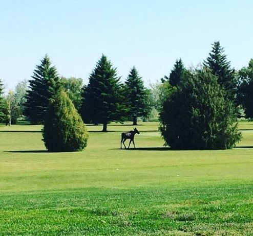 Hazard Creek Golf Course