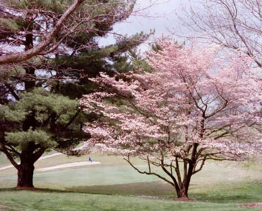 Metropolis Country Club, Metropolis, Illinois,  - Golf Course Photo